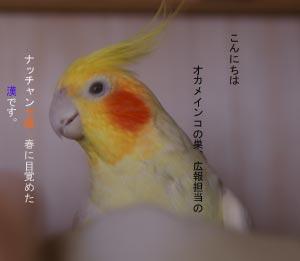20060421183943.jpg