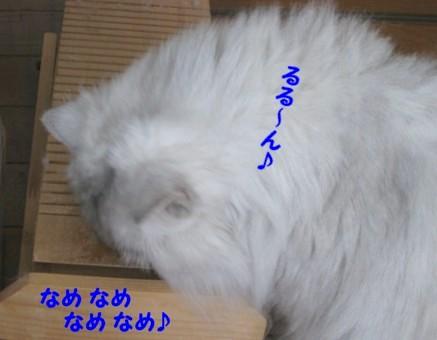 0710121.jpg