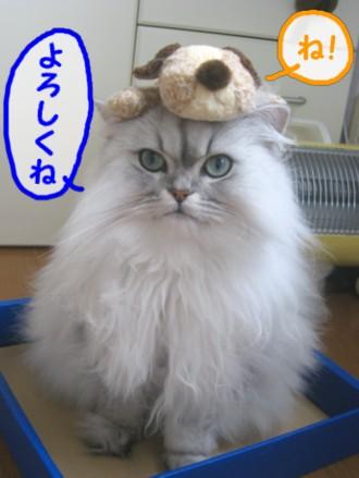 tenkyo1.jpg