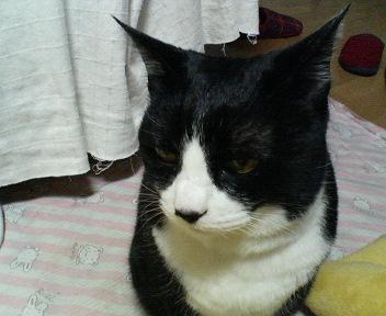 cat000.jpg