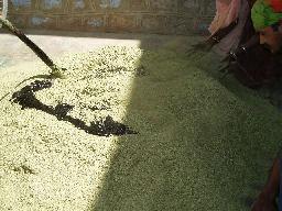 ダイアモンドグリーンと揮発性の薬品を混ぜている