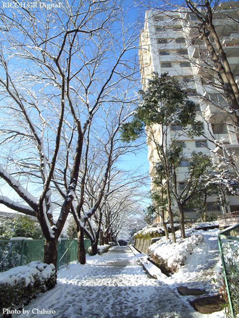 雪景色3 GR Digital: ISO64, 絞り優先AE, WB屋外, EV-0.3, F2.4, 1/760s, sRGB