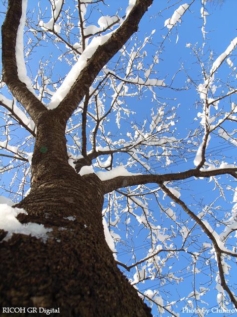 雪景色4 GR Digital: ISO64, 絞り優先AE, WBオート, EV0, F4.0, 1/410s, sRGB