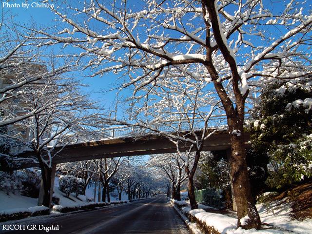 雪景色5 GR Digital: ISO64, 絞り優先AE, WBオート, EV-0.3, F4.0, 1/620s, sRGB