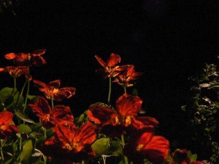 夜の花 -赤-