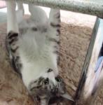 テーブルの下にて