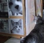 猫トイレ2