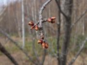 2006_0430桜