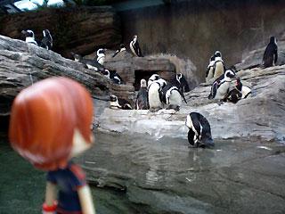 サンシャイン水族館のペンギン