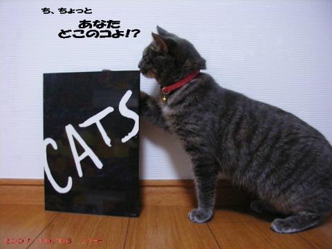 CATS②