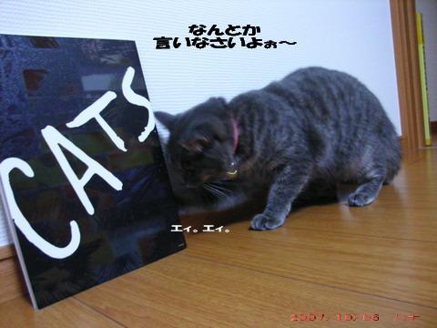 CATS③