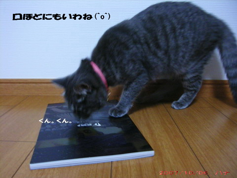 CATS④