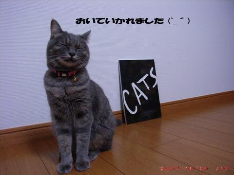 CATS①