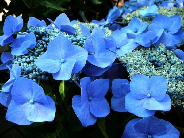bluesky1