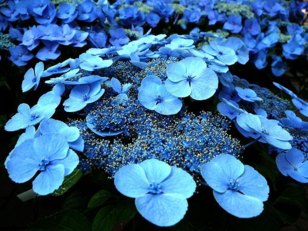 bluesky4
