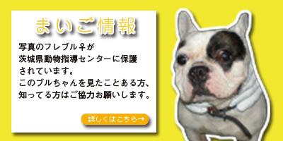 茨城県動物指導センターへ