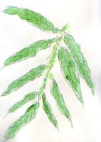 plant12.jpg