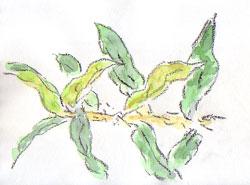plant14.jpg