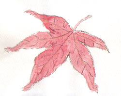 plant15.jpg