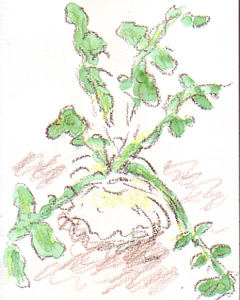plant22.jpg