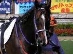 ニードルポイント新馬戦-3