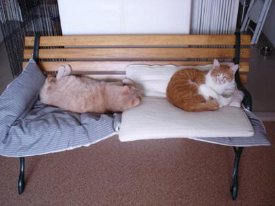bench_cat01.jpg