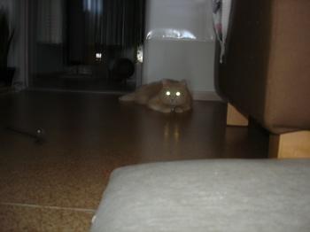 猫目ライト