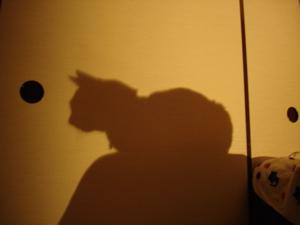 なめたけの影
