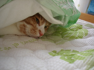 ベッドの中2