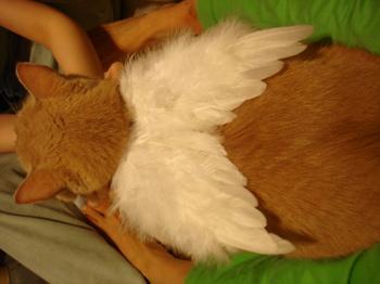 天使のはね_くぅ