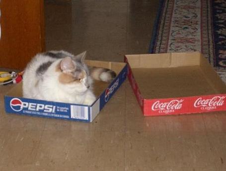 箱の質もいいからペプシ派