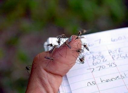 蚊に人気のスポット