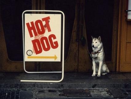 もしくは松岡修造みたいな犬