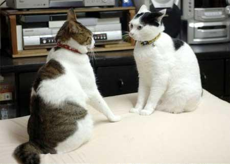 副音声では元世界王者の猫山さんに解説をお願いします。猫山さん宜しくお願いします。 「宜しくお願いします」