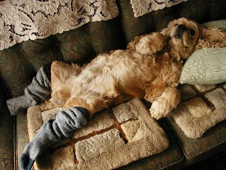 この犬も冷え性なんだね