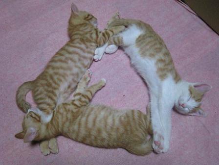 猫の三角地帯より女の子の三角地帯(おパンティー)のほうが好き
