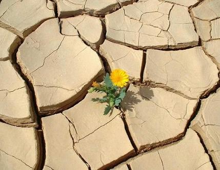 強く咲きたい