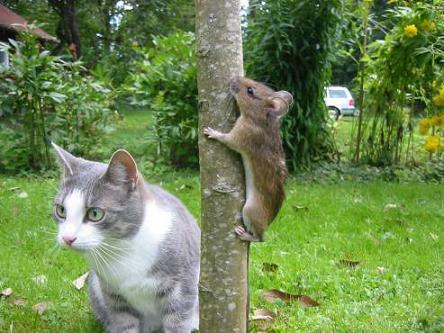 猫だって生き物さオレだって生き物さ