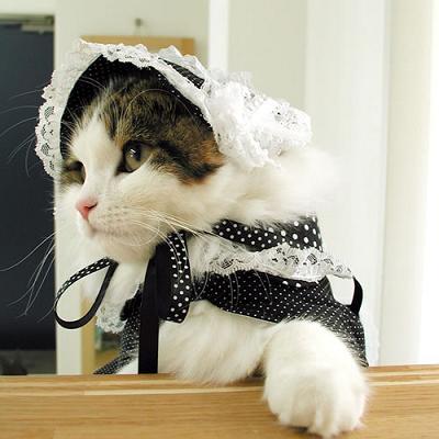 猫はゴスロリの象徴だってさ