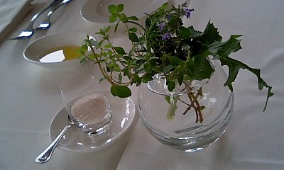 botanica5