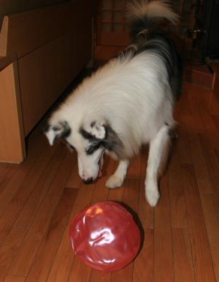 ball411