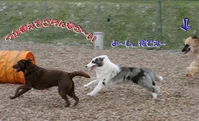 dogrun41