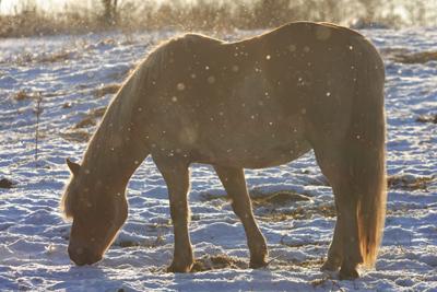 horse100