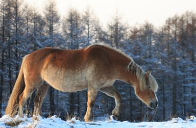 horse104