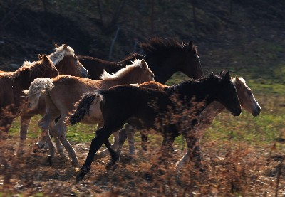 horse105