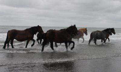 horse106