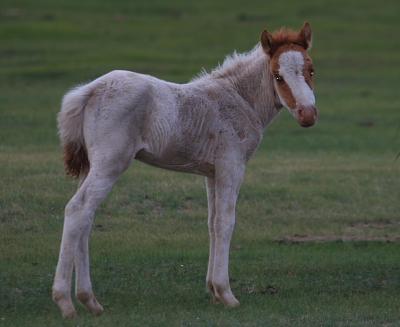 horse401