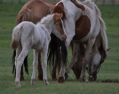horse402