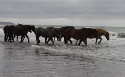 horse406