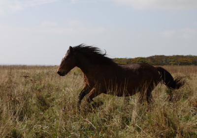 horse412